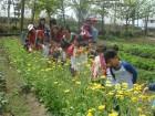 有機蔬果園(依季節可採摘)