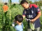 找看看哪裡有成熟的玉米!!