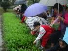 下雨天採蔬菜